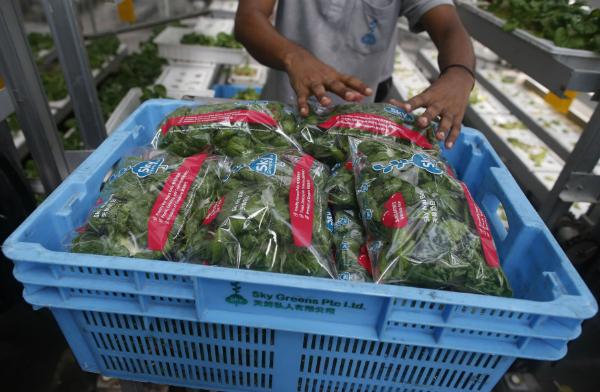 Basket garden_600x450_57bee757c3