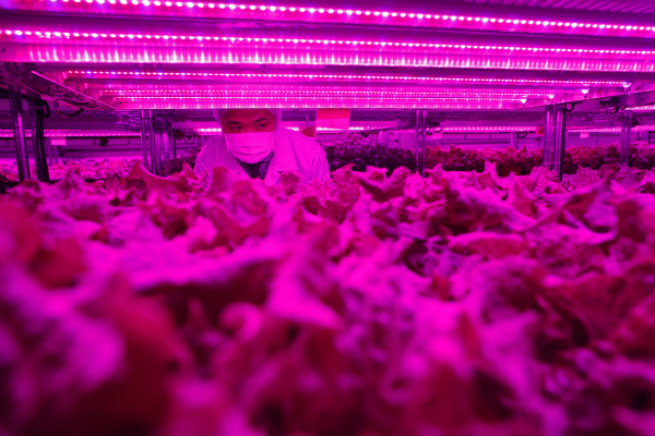 Inside Panasonic's new urban vertical farm