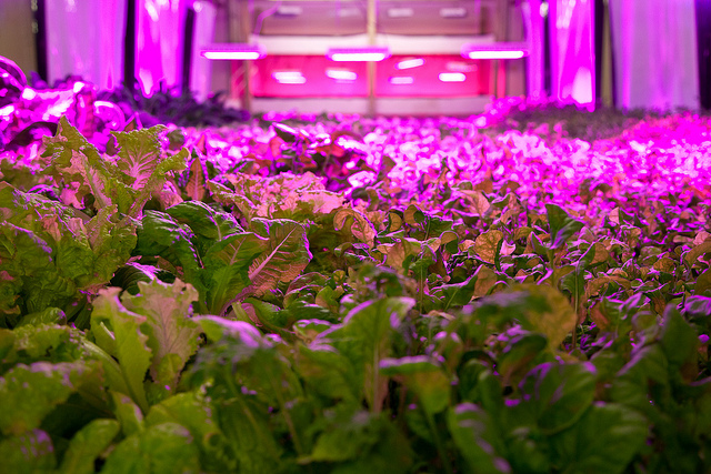 aquaponic-farm-chicago-the-plant-flickr