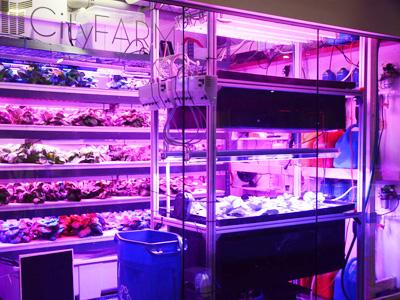 MIT CityFarm Vertical Farm