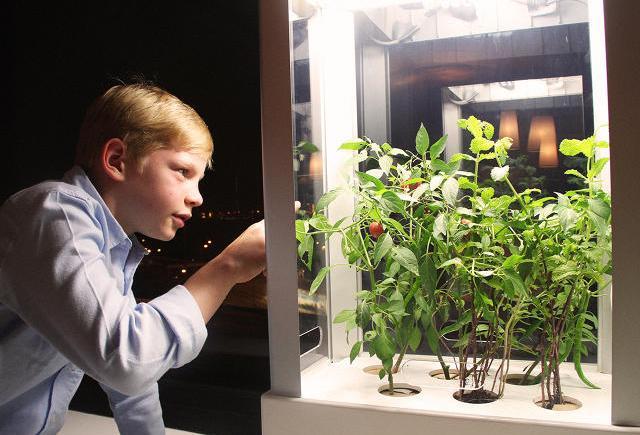 kids hydroponic
