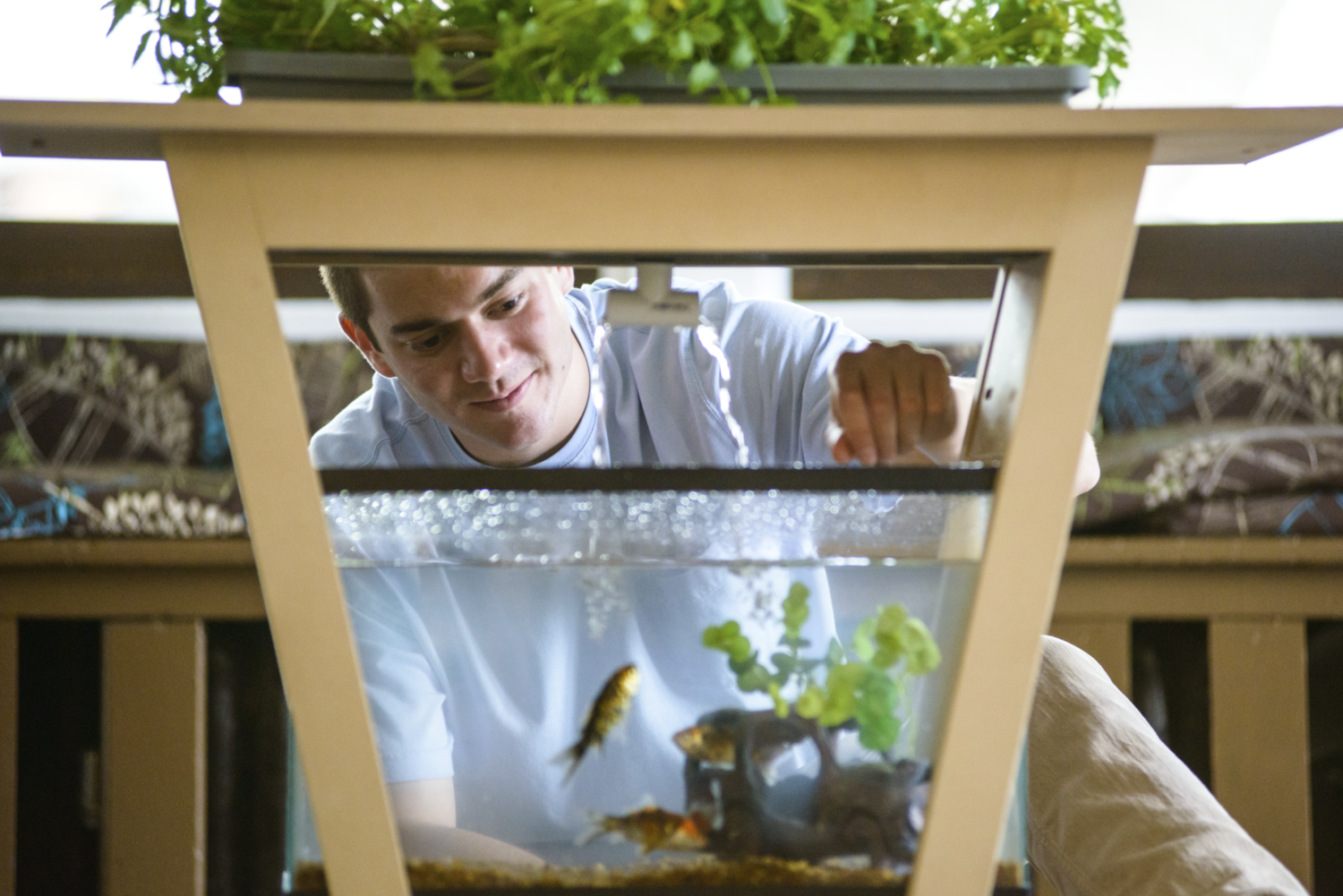 Living Furniture How The Aquaponic Table Came To Be The Urban Vertical Farming Project