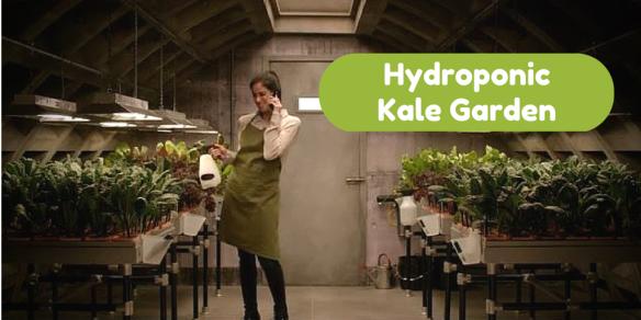 Hydroponic Kale Garden