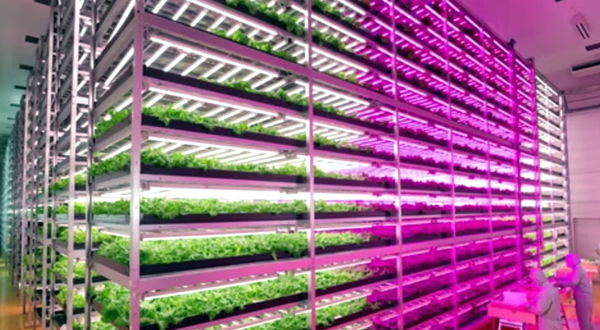 How to convince your friends vertical farming is the next big thing | The  Urban Vertical Farming Project