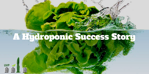 A Hydroponic Success Story