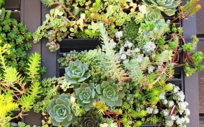 Succulent Wall Debra Prinzing 2