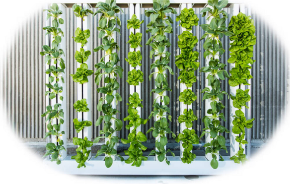 zip grow towers