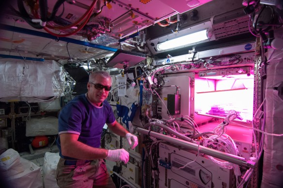 Astronaut Steve Swanson with Veggie in the background.