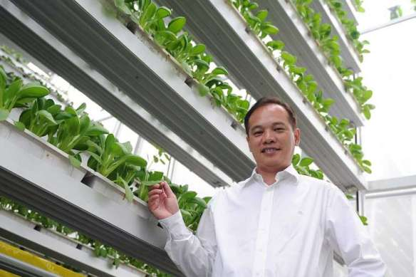 Jack Ng in his vertical farm