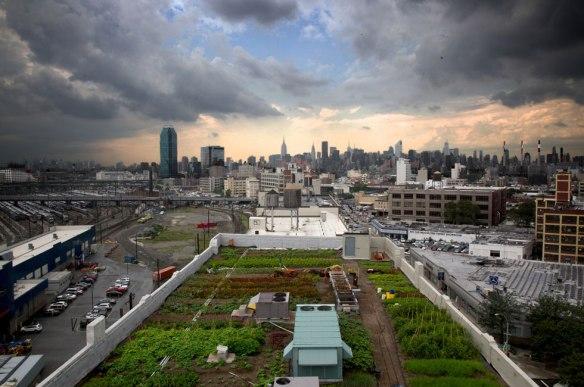 Brooklyn-Grange-rooftop-farm-New-York-City-1