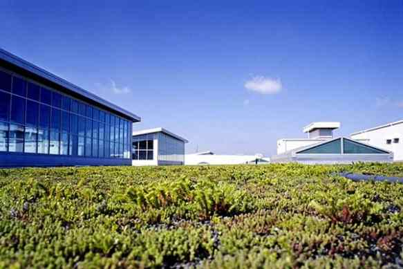 ford factory green roof