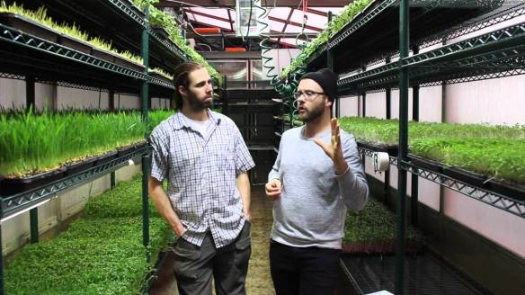 chris thoreau and urban microgreens