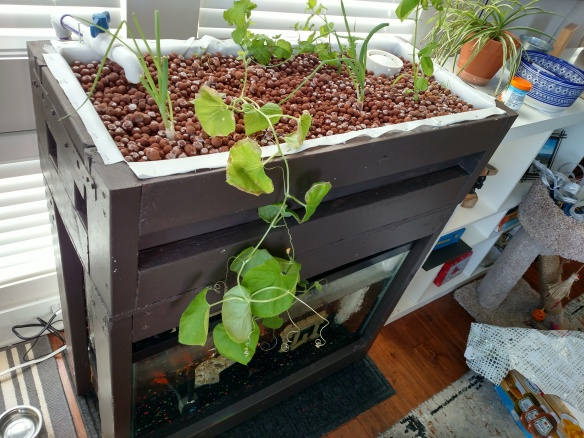 aquaponic table