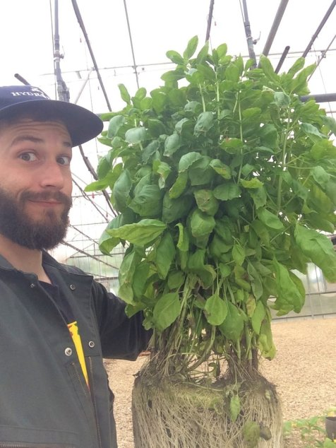 Farmer Tyler with hydroponic basil