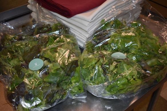 hydroponic lettuce