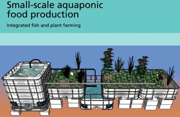 small scale aquaponic food production