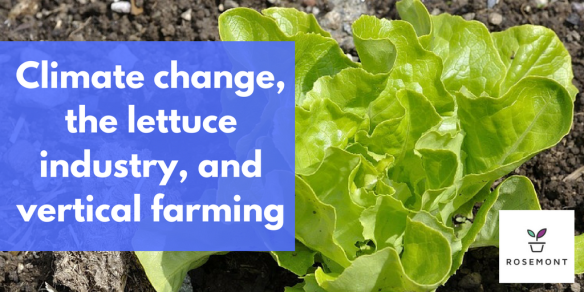 hydroponic lettuce, climate change