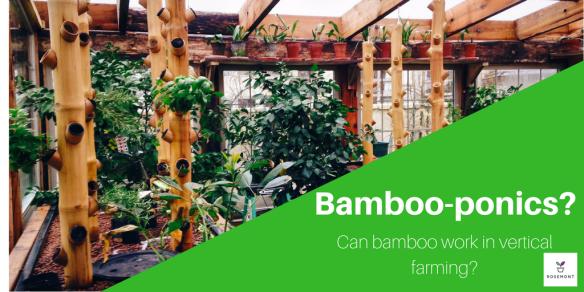 bamboo hydroponics vertical farming
