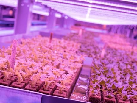 hydroponic vertical farm